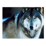 Lobo de madera tarjeta postal