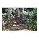 Lobo de madera tarjetas postales