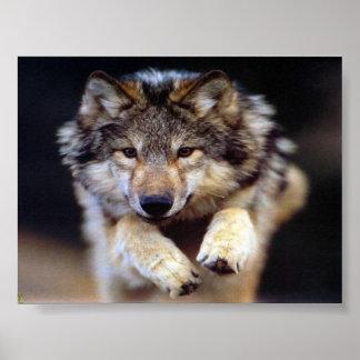 Lobo de salto póster