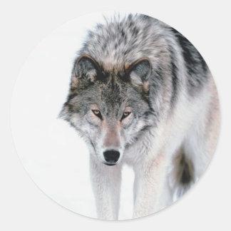 Lobo de vagabundeo pegatinas redondas
