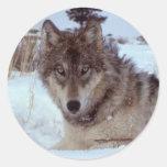 Lobo de Yellowstone Pegatina Redonda