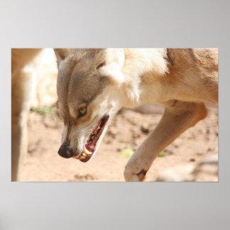 Lobo del gruñido póster
