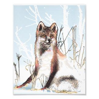 Lobo del invierno arte fotográfico
