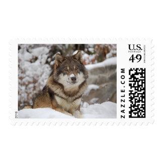 Lobo del invierno timbres postales