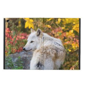 Lobo del otoño