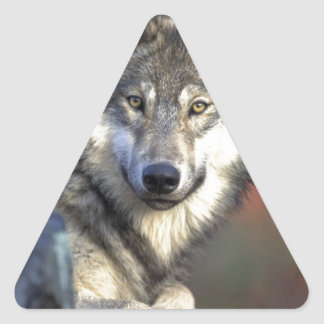 Lobo del otoño pegatina triangular