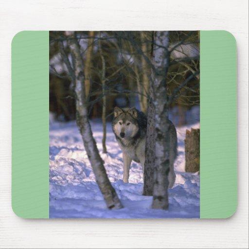 Lobo en el borde del bosque nevoso mousepads
