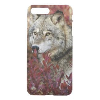 Lobo en follaje rojo funda para iPhone 7 plus