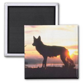 Lobo en la puesta del sol imán de frigorifico