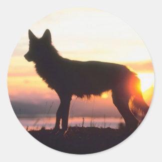 Lobo en la puesta del sol etiqueta
