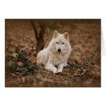 Lobo en otoño tarjeta