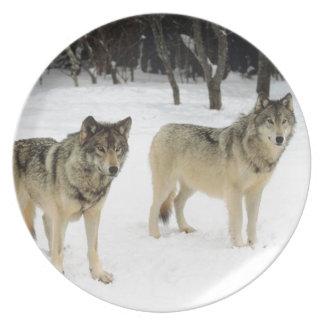Lobo en placa fotográfica de la nieve plato para fiesta