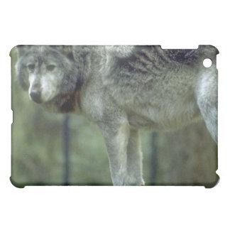Lobo en un tocón de árbol