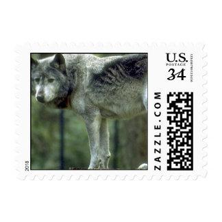 Lobo en un tocón de árbol sello
