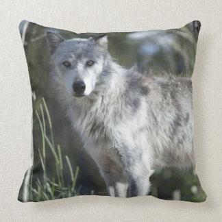 Lobo en Yellowstone Cojines