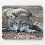 Lobo gris 8x10 Mousepad Alfombrilla De Ratón