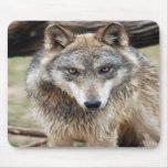 Lobo gris 8x10 Mousepad Tapete De Raton