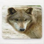 Lobo gris 8x10 Mousepad Tapetes De Ratón