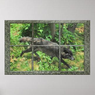 Lobo gris a través de un poster del arte de la