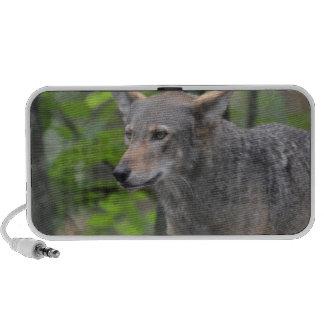 Lobo gris laptop altavoces