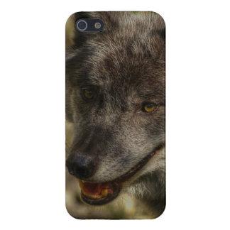 Lobo gris, animal salvaje, canino iPhone 5 cárcasa