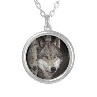 Lobo gris del acosador de la noche en el collar