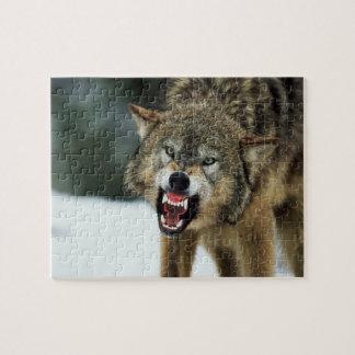 Lobo gris del gruñido puzzle con fotos