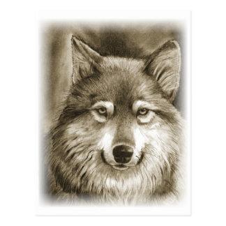 Lobo gris dócil postal