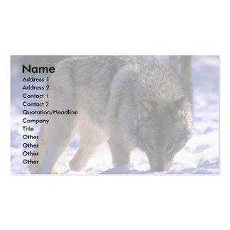 Lobo gris en el borde del bosque nevoso, contacto  tarjeta de visita