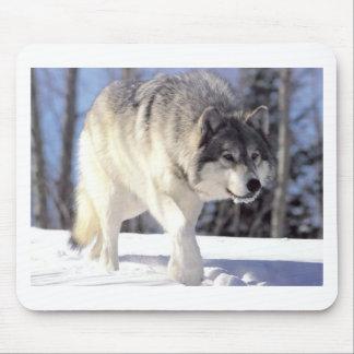 Lobo gris en el vagabundeo alfombrillas de ratones