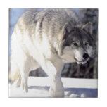 Lobo gris en el vagabundeo teja cerámica