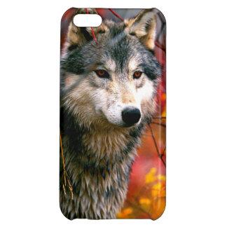 Lobo gris en follaje rojo y amarillo hermoso