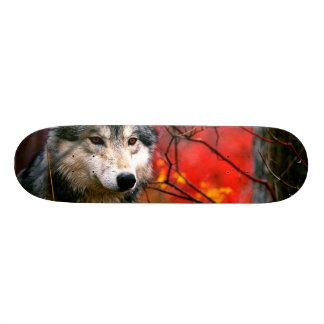 Lobo gris en follaje rojo y amarillo hermoso monopatín personalizado