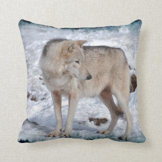 Lobo gris en foto de la fauna de la nieve del cojín
