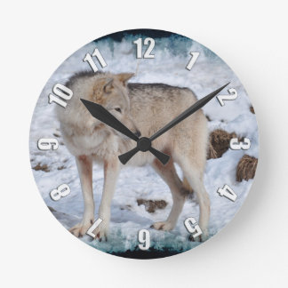 Lobo gris en foto de la fauna de la nieve del reloj redondo mediano