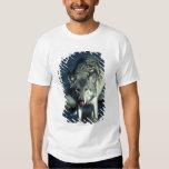 Lobo gris en la consumición del otoño remeras