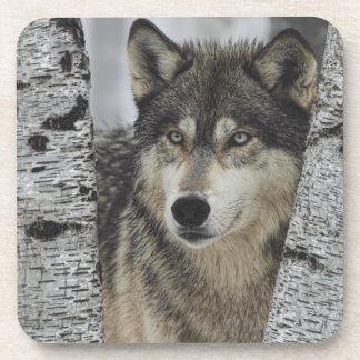 Lobo gris en los árboles posavasos