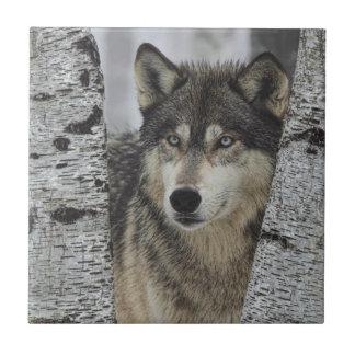 Lobo gris en los árboles teja  ceramica