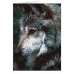 Lobo gris felicitación