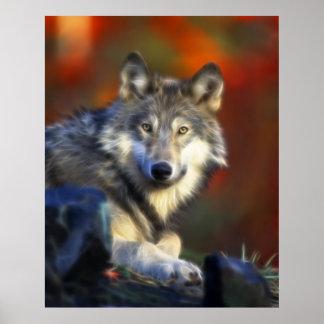 Lobo gris, fotografía de Digitaces en peligro de l Posters