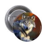 Lobo gris, fotografía de Digitaces en peligro de l Pins