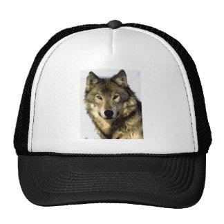 Lobo gris gorra
