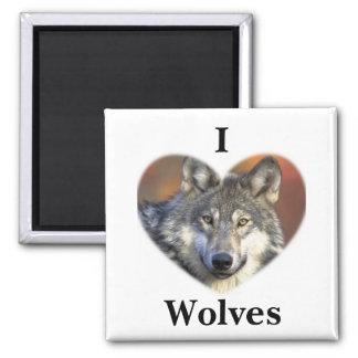 Lobo gris imán cuadrado