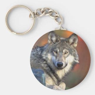 Lobo gris imponente llavero personalizado