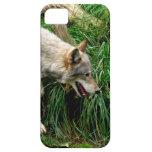 Lobo gris iPhone 5 coberturas