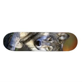 Lobo gris - lobo de madera - serie del lobo rojo patines