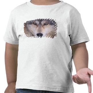 lobo gris, lupus de Canis, cierre para arriba de Camiseta