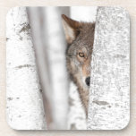 Lobo gris (lupus de Canis) detrás del árbol Posavaso