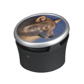 lobo gris, lupus de Canis, en las colinas de 2 Altavoz Bluetooth