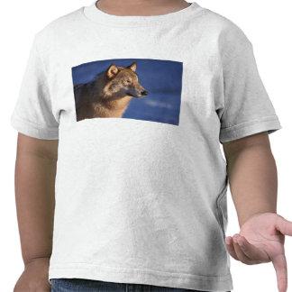lobo gris, lupus de Canis, en las colinas de 2 Camiseta